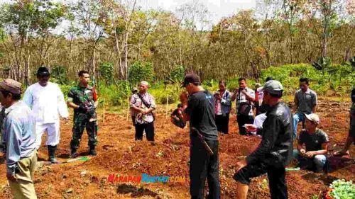 Petani Pangandaran Tanam Kol di Lahan PTPN